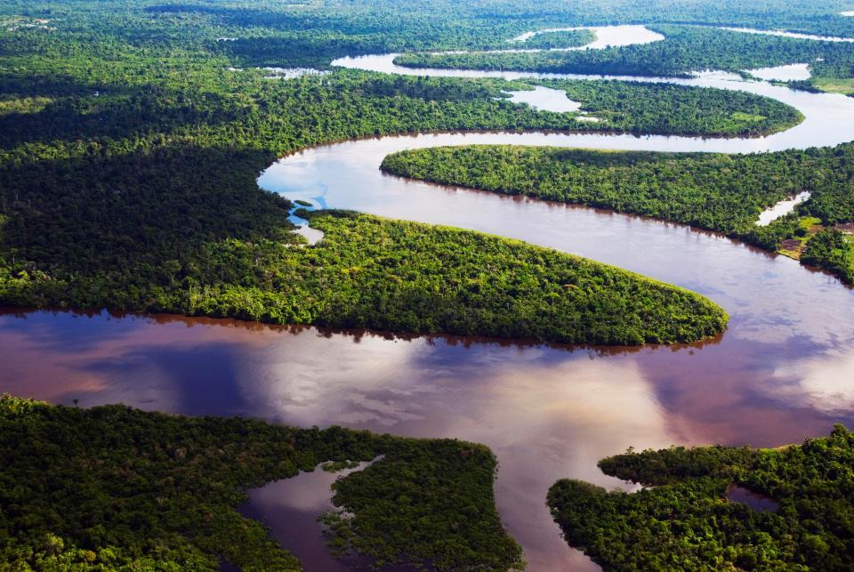 Heritage Brazil Celebrates - Endangered Species Day